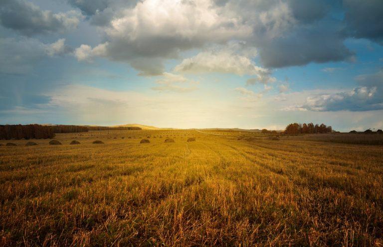 Dopłaty bezpośrednie dla rolników