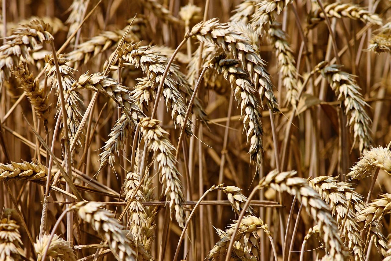 KE wyszła z propozycją wsparcia dla rolników z powodu suszy
